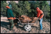 game cart carrying elk